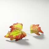 Autumnal Vine Leaves Photographic Print by Brigitte Wegner