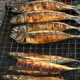 Several Saba Fish on a Grill Rack Photographic Print