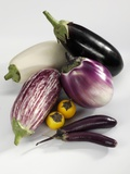Various Types of Aubergines Photographic Print by Karl Newedel