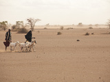 Merti, Northern Kenya, a Family Makes the Long Journey to Market with their Goats Photographic Print by Tom Martin