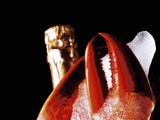 Lobster Claw, Champagne Bottle Behind, Close-Up Photographic Print by Dieter Heinemann