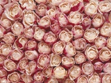 Roses Photographic Print by Brigitte Wegner