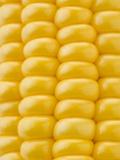 Corn on the Cob Fotografisk tryk af Greg Elms