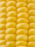 Corn on the Cob Photographic Print by Greg Elms