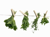 Herbs Drying on a Washing Line Photographic Print by  Kröger & Gross