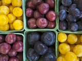 Various Varieties of Plums in Cardboard Punnets Photographic Print by Dirk Olaf Wexel