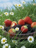 Bowl of Strawberries and Blackberries in Grass with Daisies Photographic Print by Linda Burgess