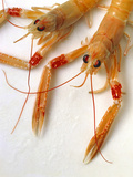 Scampi Photographic Print