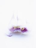 Three Unpeeled Cloves of Garlic Fotografisk tryk af Marc O. Finley