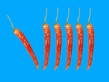 Dried Red Chillies Against a Blue Background Photographic Print by Chris Schäfer
