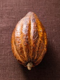 Cacao Pod on Brown Background Photographic Print