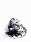Squid in its Own Ink Photographic Print by Nicolas Lemonnier