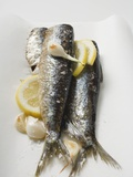Marinated Sardines with Garlic and Lemon Photographic Print
