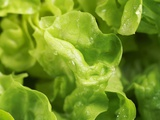 Fresh Lettuce Photographic Print by Kai Stiepel