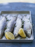 Fresh Trout with Lemon and Parsley, Ready for Grilling Fotografie-Druck