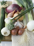 Onions, Chives and Garlic Chives Stampa fotografica