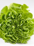 Lettuce Photographic Print by Barbara Lutterbeck
