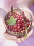 Woman Holding Small Basket of Redcurrants Photographic Print