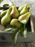 Pears in a Drawer Photographic Print by Clive Streeter