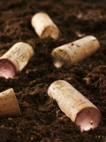 Several Wine Corks on Soil Photographic Print by Albert Fritz