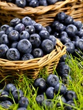 Fresh Blueberries in Wicker Baskets Photographic Print by Stuart MacGregor