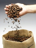 Coffee Beans Falling from Someone's Hand into a Sack Photographic Print by Gustavo Andrade