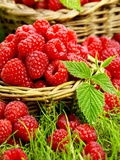 Fresh Raspberries in Two Baskets Photographic Print by Stuart MacGregor
