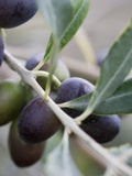 Olives on a Sprig Photographic Print by Rogge & Jankovic