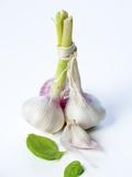 Fresh Green Garlic Photographic Print by Ira Leoni