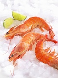 Shrimp on Ice Photographic Print by Jürgen Holz