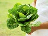 A Woman Holding a Lettuce Lámina fotográfica