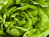 Fresh Lettuce Fotografie-Druck von Greg Elms