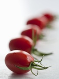Plum Tomatoes in a Row Photographic Print by Martina Schindler