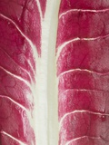 Radicchio Leaf Photographic Print