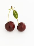 A Pair of Cherries with Stalks and Leaf Photographic Print by Karl Newedel