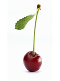 A Cherry with Stalk and Leaf Photographic Print by Janez Puksic