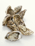 Fresh Oysters with Drops of Water Photographic Print by  Kröger & Gross