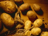New Potatoes with Soil and Jute Sack Photographic Print by Ulrike Koeb
