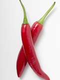 Two Red Chillies Photographic Print