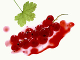 Redcurrants Photographic Print