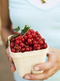 Hands Holding Cardboard Punnet of Redcurrants Photographic Print