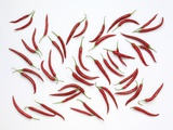 Many Red Chillies Photographic Print by Karl Newedel