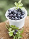Blueberries in Plastic Tub Photographic Print
