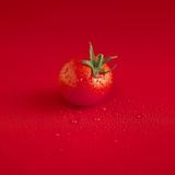 A Wet Tomato on a Red Surface Photographic Print by Dave King