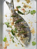 Roasted Gilthead Bream with Lemon Grass and Coriander Leaves Photographic Print