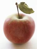 Elstar Apple with Leaf Fotografisk tryk af Marc O. Finley