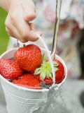 Washing Strawberries in a Bucket Photographic Print