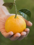 Hand Holding an Orange with Leaves Photographic Print