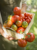 Woman Holding Basket of Tomatoes Photographic Print