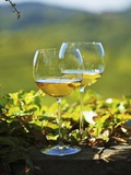 Two Glasses of White Wine Against the Friaul Landscape of Italy Photographic Print by Herbert Lehmann